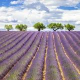 Lavendelfyrkant Royaltyfria Foton