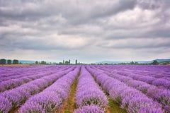 Lavendelgebied in Bulgarije Royalty-vrije Stock Fotografie