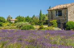 Lavendelgebied in de Provence, Frankrijk Royalty-vrije Stock Foto