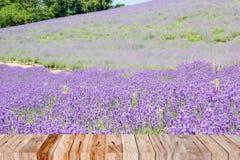 Lavendelgebied in de zomer van Japan Royalty-vrije Stock Foto