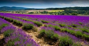 Lavendelgebied dichtbij Sault op het gebied van de Provence in Frankrijk stock foto
