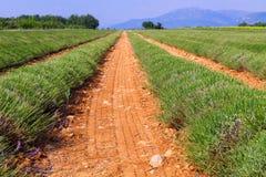 Lavendelgebied het oogsten dichtbij Valensole in de Provence stock foto