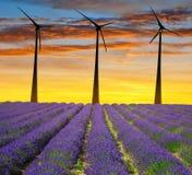 Lavendelgebied met windturbines stock afbeeldingen