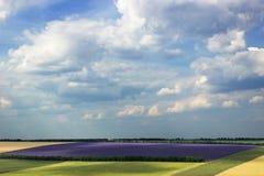 Lavendelgebied op een zonnige dag stock afbeeldingen