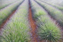 Lavendelgebied in Plateau DE Valensole, de Provence, Frankrijk stock fotografie