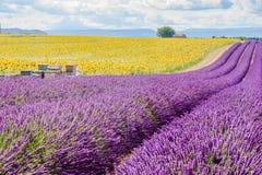 Lavendelgebied in Valensole Stock Foto's