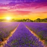 Lavendelgebieden in de Provence bij zonsondergang royalty-vrije stock foto