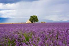 Lavendelgebieden dichtbij Valensole in de Provence, Frankrijk Stock Afbeeldingen