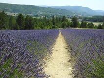 Lavendelgebieden en Bergen Royalty-vrije Stock Fotografie
