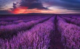 Lavendelgebieden Prachtig beeld van lavendelgebied Het landschap van de de zomerzonsondergang, tegenover elkaar stellende kleuren stock foto