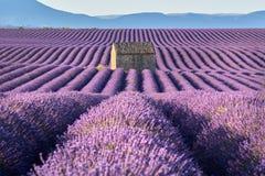 Lavendelgebieden in Valensole met steenhuis in de Zomer Alpes-De-Haute-Provence, Frankrijk stock afbeeldingen