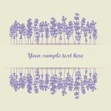 Lavendelhintergrund lizenzfreie abbildung
