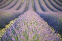 Lavendelhintergrund Stockfotos