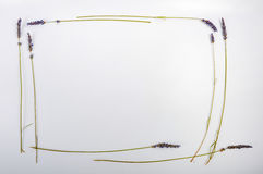 Lavendelkader Royalty-vrije Stock Afbeelding