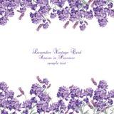 Lavendelkort med blommor i vattenfärgmålarfärg Royaltyfria Bilder