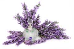 Lavendel-Blumen-Geruch Stockfoto
