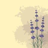 Lavendelkvistar på färgpulvret spots bakgrund vektor illustrationer