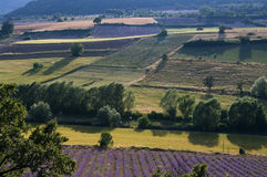 Lavendellandschaft Stockbild