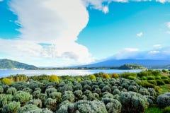 Lavendellantgården i Oishi parkerar, sjön Kawaguchiko Fotografering för Bildbyråer