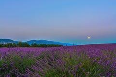 Lavendelmåne II Arkivbild