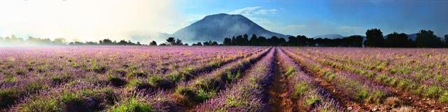 Lavendelmorgennebel lizenzfreies stockbild