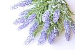 Lavendelniederlassung auf einem weißen Hintergrund Lizenzfreies Stockfoto