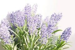 Lavendelniederlassung auf einem weißen Hintergrund Stockfotos