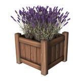 Lavendelplanter op Wit Stock Afbeelding
