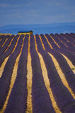 Lavendelpostkarte Stockfotos