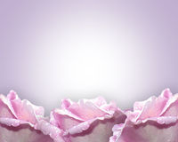 Lavendelrosen Lizenzfreies Stockfoto