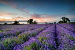 Lavendelsoluppgång royaltyfri bild