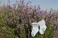 Lavendelstämme und Babysocken auf einem Gebiet Stockbilder