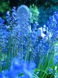 Lavendelsterfgevallen royalty-vrije stock afbeelding