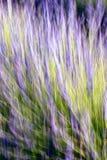 Lavendelstiele im abstrakten Design Lizenzfreie Stockbilder