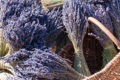 Lavendelstruiken voor verkoop Royalty-vrije Stock Fotografie