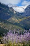 Lavendelszene Sangre De Cristo Mountains Stockfotografie