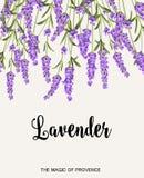 Lavendelteckenetikett Royaltyfri Fotografi