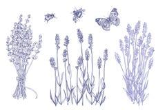 Lavendeluppsättning med bin vektor illustrationer