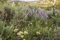 Lavendelvildblommor och malört royaltyfri bild