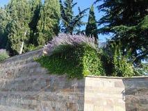 Lavendelwand Stockfoto