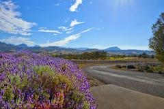 Lavendelweg Royalty-vrije Stock Foto's