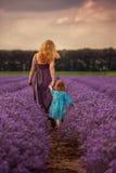 Lavendelzonsondergang Stock Foto