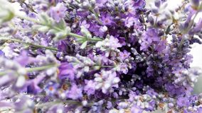 Lavender ανθίζει την κινηματογράφηση σε πρώτο πλάνο με θολωμένο background_1 στοκ εικόνα με δικαίωμα ελεύθερης χρήσης