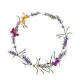 Lavender ανθίζει το στεφάνι, πεταλούδες watercolor Στοκ Εικόνα