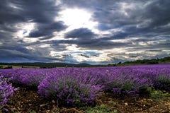 Lavender ανθίζοντας τομείς λουλουδιών Στοκ εικόνα με δικαίωμα ελεύθερης χρήσης