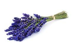 Lavender ανθοδέσμη που απομονώνεται Στοκ Εικόνα