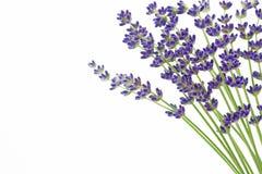 lavender αντιγράφων διάστημα Στοκ φωτογραφία με δικαίωμα ελεύθερης χρήσης