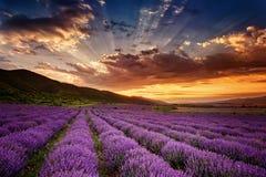 Lavender αυγή Στοκ φωτογραφίες με δικαίωμα ελεύθερης χρήσης