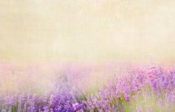 Lavender βαμβάκι Στοκ φωτογραφίες με δικαίωμα ελεύθερης χρήσης