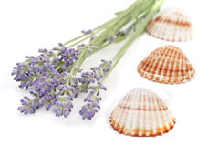 lavender ζωή ακόμα Στοκ φωτογραφία με δικαίωμα ελεύθερης χρήσης